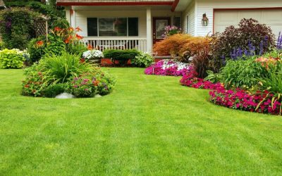 Simple Steps to Keep Your Lawn Mower in Top Shape